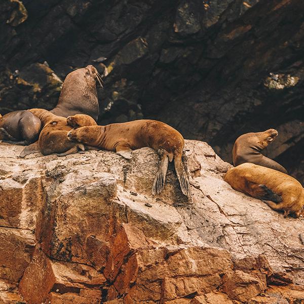 Paracas Rondreis Peru