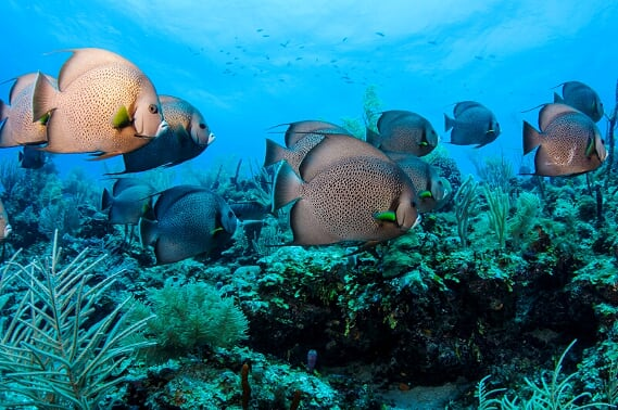 Rondreis Belize Caye Caulker duiken 2