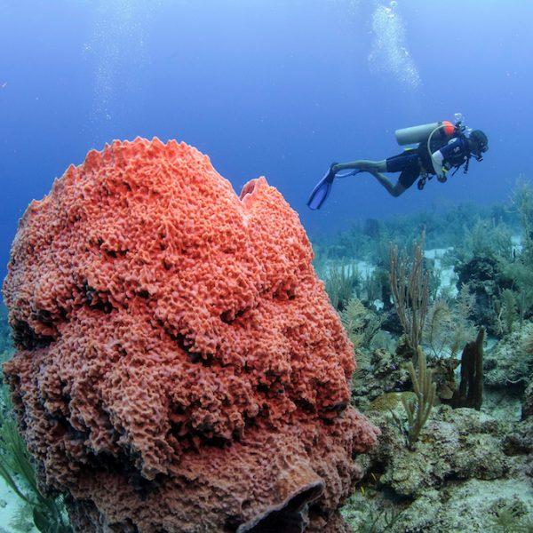 Ga duiken in Belize vanaf San Pedro