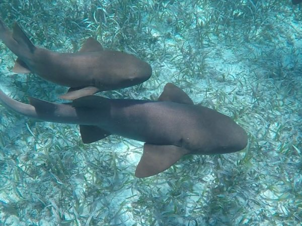 Belize-zee-CayeCaulker