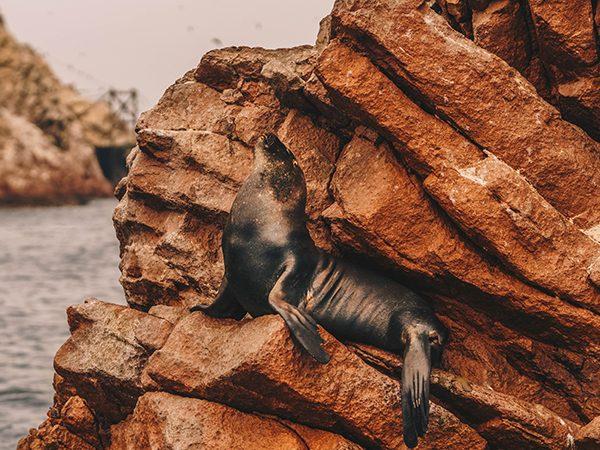IslasBallestas-RondreisPeru