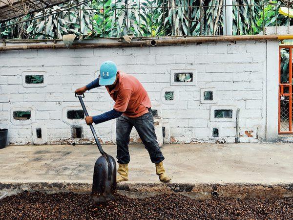 KoffieTour-Colombia-Rondreis