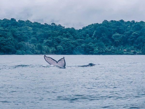 Beste Reistijd Colombia om Walvissen te Spotten