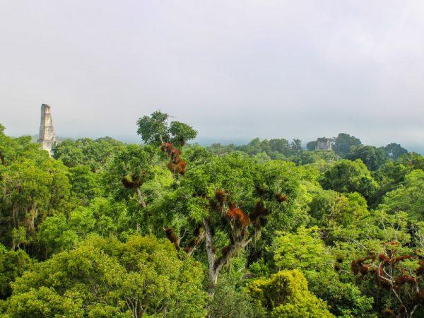 Tikal-Flores-Guatemala-Blog-Travelfiesta