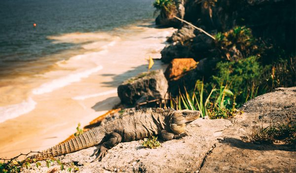 Tulum-MayaRuines-Travelfiesta