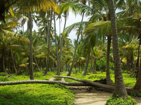 Wandel door de dichtbegroeide jungle van Tayrona Park tijdens je rondreis door Colombia